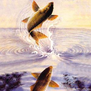 彩铅画鲤鱼步骤图片