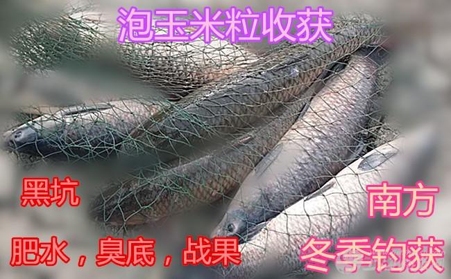 圣钓仕钓鲫鱼小药添加剂7.jpg