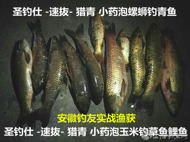 圣钓仕-速抜-猎青渔获2.jpg